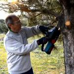 Eliminación de un piso de ramas a un aPino