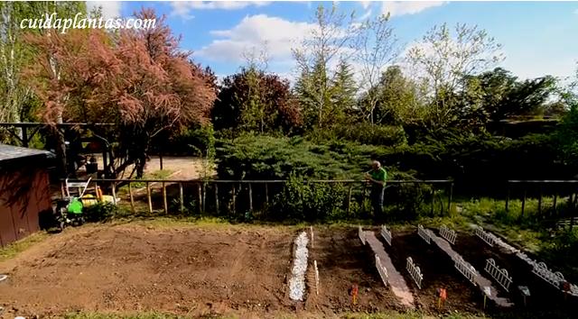 Preparar la huerta y plantar tomates