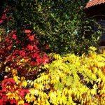 Todos los colores del otoño en el jardín de noviembre