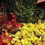 Todos los colores… del otoño.