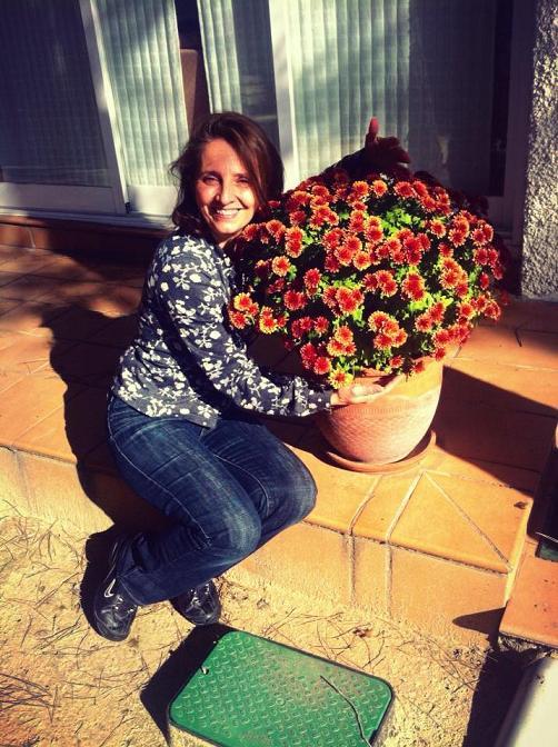 ¿Cuándo se podan los crisantemos? Poda mes a mes