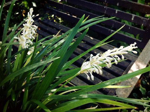 Bayas blancas en el jardin de Pepe Plana