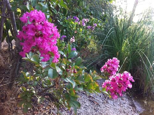 El tiempo en septiembre en el jardín