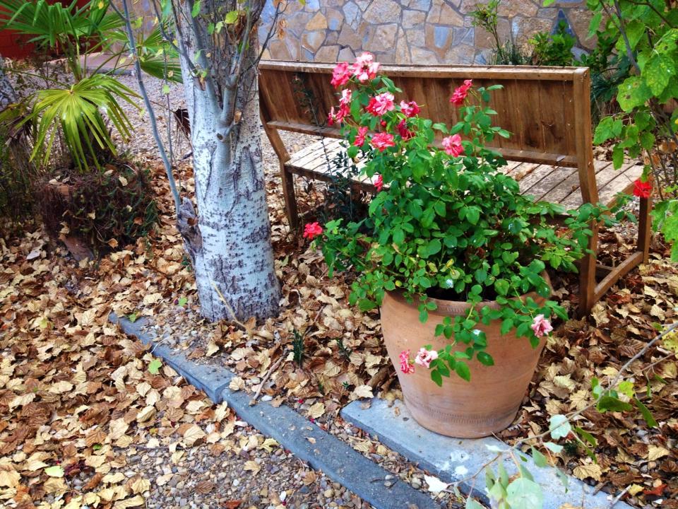 Este septiembre acolchados para plantas