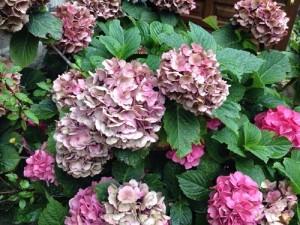 la jardineria, ese beneficio siempre criticado