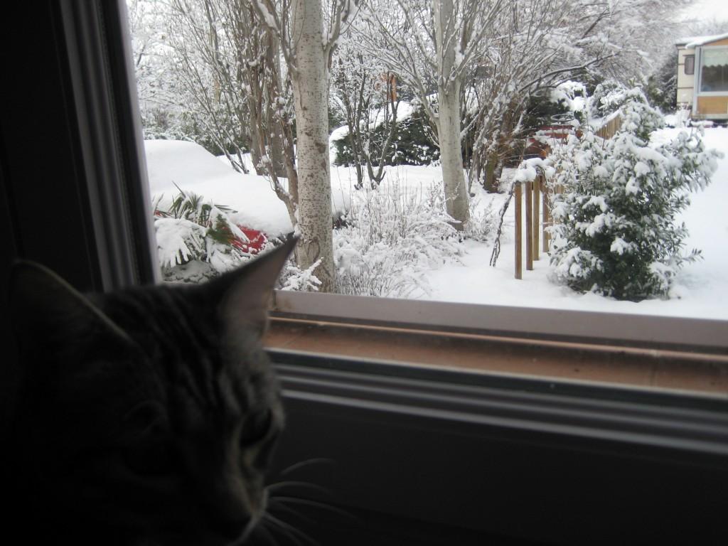Jardín bajo la nieve, con Gato en primer término