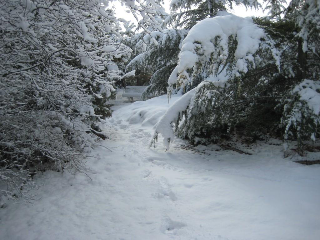 Senderos nevados ¿a dónde conducirán?