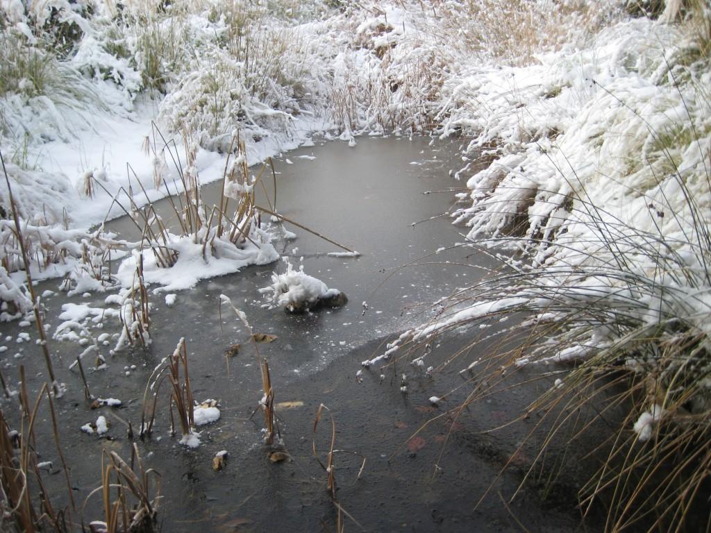 Como colofón, el estanque helado y nevado...