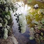 El estanque y sus secretos