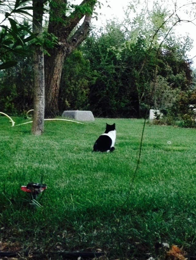 fidi en el jardin