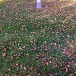 Cuidados del césped en otoño