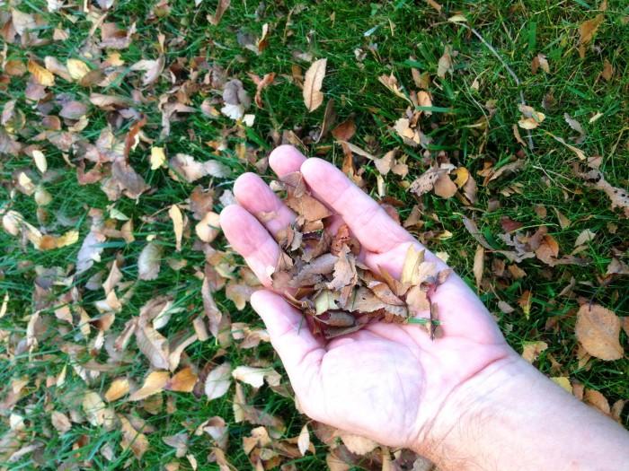 Los residuos quedan recortados, minimizados y se incorporan al terreno.