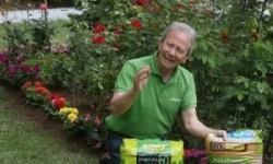 Planta flores de jardín para disfrutar su color y aroma en primavera