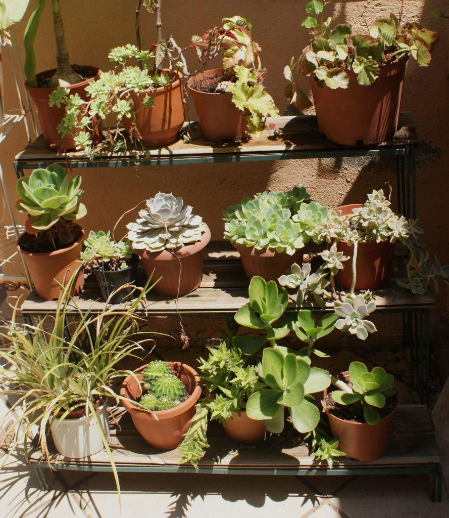 Paisajismo: Adaptación Jardín a Cambio Climático