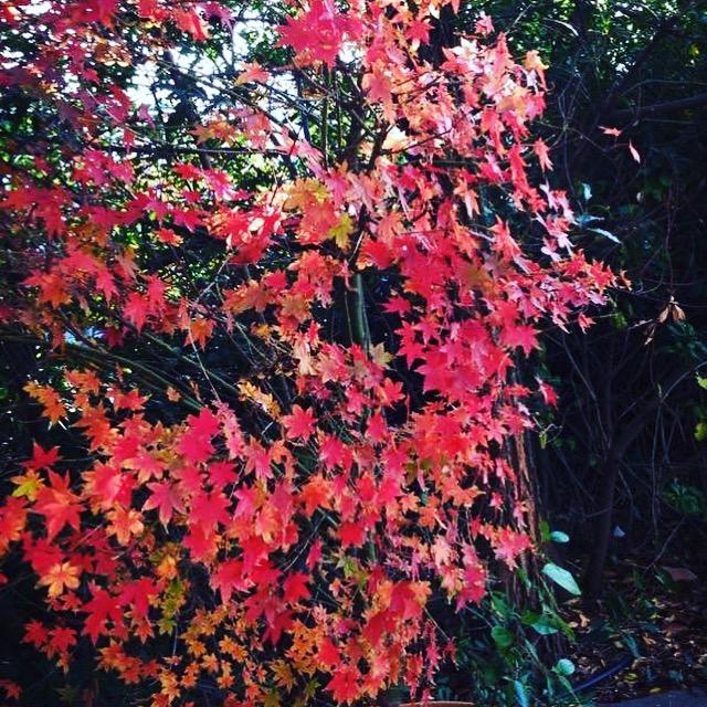 La estación de otoño